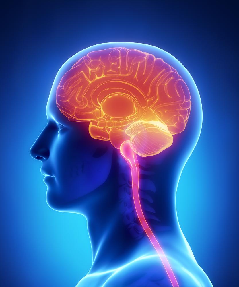 Jak odkrywamy działanie mózgu? Cz. 1
