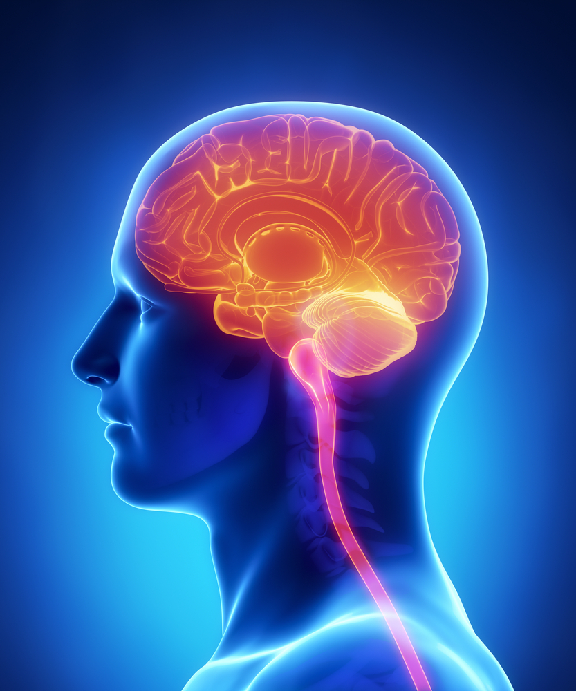8 najpopularniejszych nieporozumień na temat mózgu…