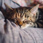 Dlaczego brak snu może być zabójczy?